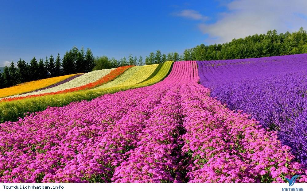 Những cánh đồng hoa bạt ngàn đa màu sắc ở Hokkaido Nhật Bản - Ảnh 1