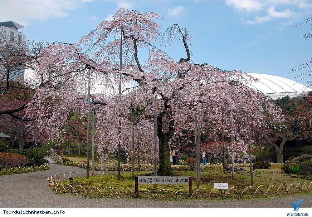 Tới đâu ngắm hoa anh đào Nhật Bản là lý tưởng nhất - Phần 2 - Ảnh 5
