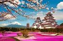 Tour du lịch Hokkaido - Tokyo Ngắm Hoa Tử Đằng ngày 28/04/2016