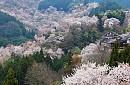 Tour du lịch Nhật Bản - Dip lễ 30/04 Từ TP.HCM