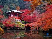 Tour du lịch Nhật Bản ngắm lá đỏ tháng 10& 11: TOKYO - NIKKO - HAKONE