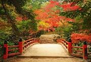 5 địa điểm tuyệt vời nhất mùa lá đỏ Nhật Bản