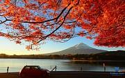 Cảm Nhận Mùa Thu Nhật Bản Qua Hình Ảnh Sắc Lá Đỏ