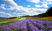 Đảo Hokkaido Nhật Bản