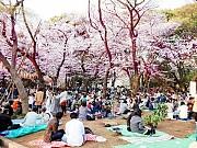 Du Khách Bất Ngờ Với Điều Luật Lạ Lùng Thú Vị Khi Du Lịch Nhật Bản