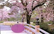 Nên Đi Đu Lịch Nhật Bản Vào Thời Điểm Nào Là Đẹp Nhất?