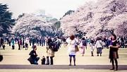 Ngắm nhìn vẻ đẹp vườn Quốc Gia Shinjuku Gyoen – Nhật Bản