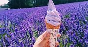 Những lý do nên chọn du lịch Nhật Bản vào mùa hè