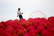 Tới Nhật Bản ghé thăm thiên đường hoa đẹp mê hồn