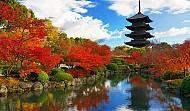 Mùa thu lãng mạn bên sắc đỏ của lá phong tại Nhật Bản