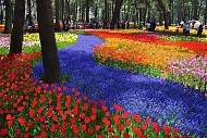 Nhật Bản - đất nước của vô vàn cảnh đẹp làm người ta khó quên