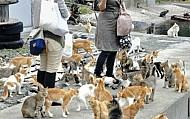 Thiên Đường Của Loài Mèo TaShiRoJiMa