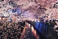 Tới đâu ngắm hoa anh đào Nhật Bản là lý tưởng nhất - Phần 2