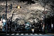 Vẻ Đẹp Nhật Bản Qua Chùm Ảnh Khiến Bạn Chỉ Muốn Đi Nhật Ngay