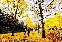 Bí Quyết Vàng Cho Chuyến Du Lịch Nhật Bản Với Túi Tiền Khiêm Tốn