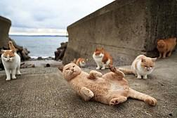 Đến Nhật Bản Thăm Vương Quốc Của Loài Mèo