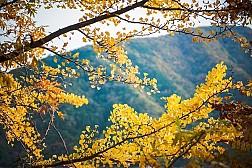 Đến Okutama Nhật Bản - Ngắm Rừng Cây Lá Đỏ Tại