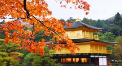 Trải nghiệm mùa thu vàng Nhật Bản 6n5d: Nagoya - Nara - Osaka - Fuji - Tokyo