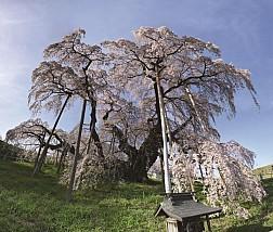 Fukushima - tuyết rơi trắng trời sau mùa lá đỏ Nhật Bản