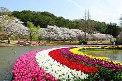 Khám Phá Xứ Sở Hoa Anh Đào Hành Trình Osaka – Kobe – Kyoto – Hamamatsu - Phú Sỹ – Tokyo