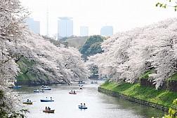 Mùa Hoa Anh Đào Nhật Bản Và Những Địa Điểm Hẹn Hò Lãn Mạn