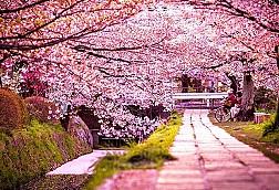 Nhật Bản có gì nổi tiếng?