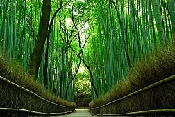 Những những địa điểm du lịch ai cũng thích mê khi tới với Nhật Bản