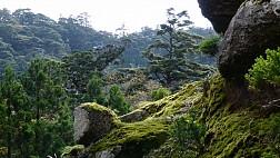 Rừng Cổ Yakushima