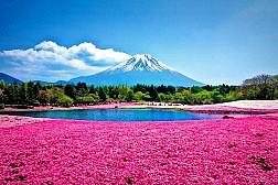 Tại sao lại đi du lịch Nhật Bản vào mùa hè