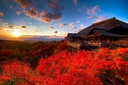 Tour Du lịch Nhật Bản Mùa Lá Đỏ từ Hồ Chí Minh