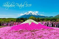 Tour Du Lịch Nhật Bản Lễ Hội Hoa Chi Anh- Shibazakura