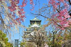 Tour Du Lịch Khám Phá Hương Sắc Mùa Xuân Nhật Bản 2019