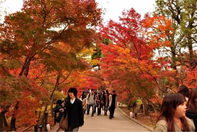 8 Lễ Hội Mùa Xuân Hấp Dẫn Ở Tokyo Nhật Bản
