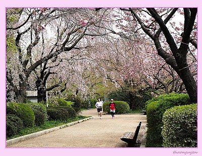 Blog Nhật Ký Du Lịch Nhật Bản - Nhật Bản Những Ngày Mùa Xuân