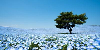 Du khách nào cũng muốn trở lại Nhật Bản vì đâu?
