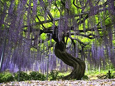 Du lịch Nhật Bản du khách đừng bỏ lỡ những điểm đến tuyệt đẹp này