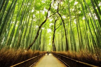Khám Phá Không Gian Tuyệt Đẹp Của Rừng Tre Sagano Nhật Bản
