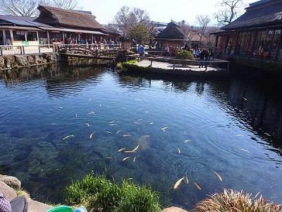 Khám phá ngôi làng cổ Oshino Hakkai dưới chân núi Phú Sĩ