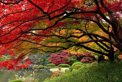 Khám Phá Yoyogi- Một Trong Bốn Công Viên Lớn Nhất Tokyo