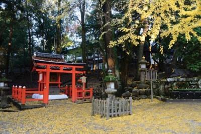 Momiji - Mùa lá đỏ xứ Phù Tang