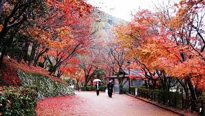 Nara - Nét duyên thầm trong lòng Nhật Bản