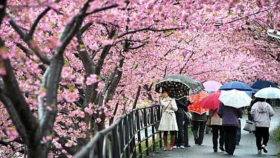 Tham gia những lễ hội đặc sắc nhất tại đất nước Nhật Bản