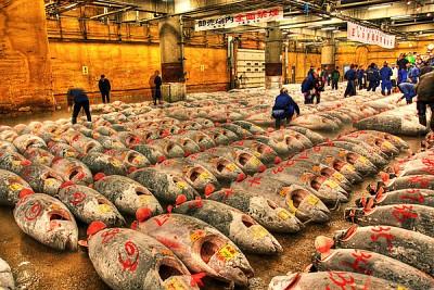 Trải Nghiệm Bầu Không Khí Nhộn Nhịp Tại Chợ Cá Tsukiji Nhật Bản