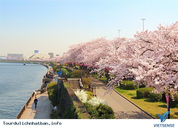 bạn nên biết những điều này khi đi du lịch Nhật Bản - Ảnh 1