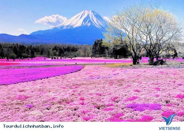 Một số điều bạn nên biết khi đi du lịch Nhật Bản - Ảnh 4