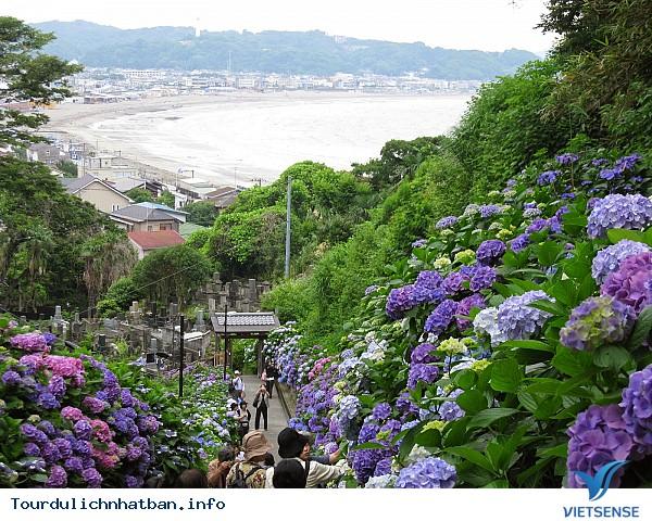 Những lễ hội hoa báo hiệu mùa hè ở Nhật Bản - Ảnh 5