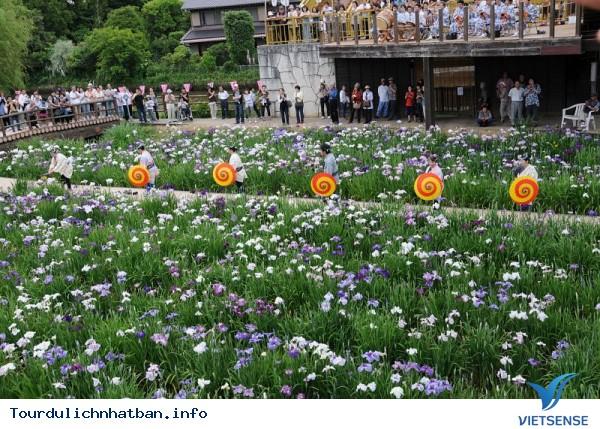 Những lễ hội hoa báo hiệu mùa hè ở Nhật Bản - Ảnh 1