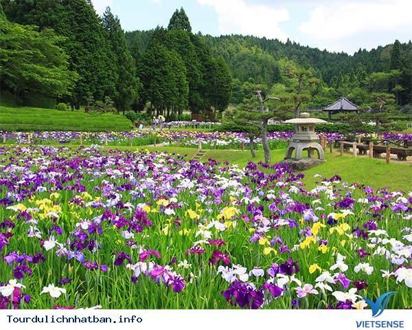 Những lễ hội hoa báo hiệu mùa hè ở Nhật Bản - Ảnh 2
