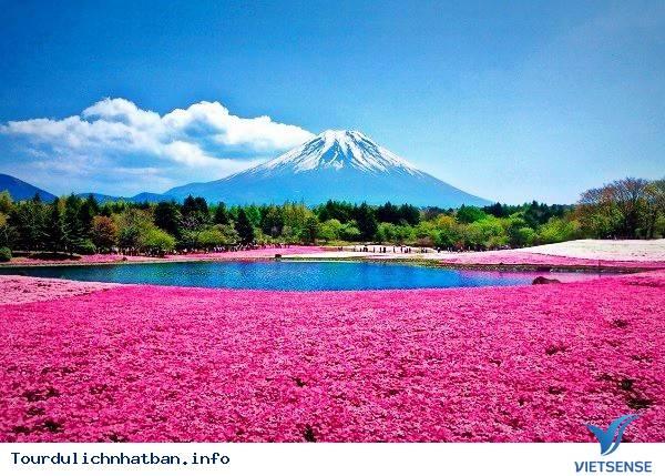 Tại sao lại đi du lịch Nhật Bản vào mùa hè - Ảnh 1