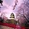 Những trải nghiệm khó quên trong chuyến du lịch Nhật Bản